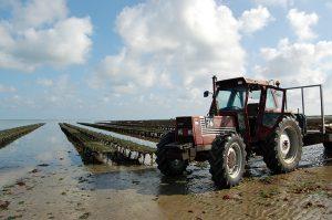 huitres de Normandie Isigny-sur-Mer – bessin- 1