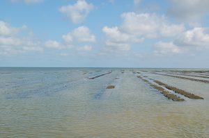 huitres Isigny – bessin – huîtres de Normandie - 3